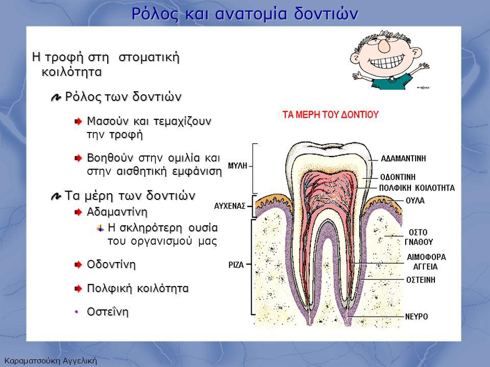 Ρόλος και ανατομία δοντιών