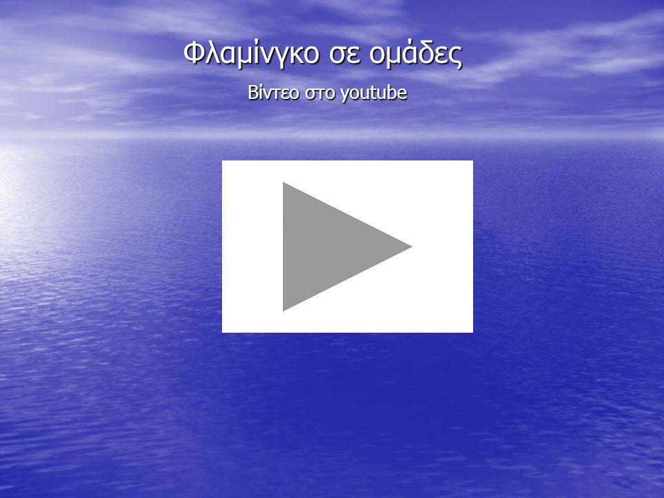 Φλαμίνγκο σε ομάδες Βίντεο στο youtube