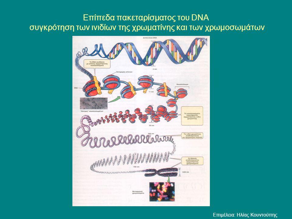 Επίπεδα πακεταρίσματος του DNA συγκρότηση των ινιδίων της χρωματίνης και των χρωμοσωμάτων