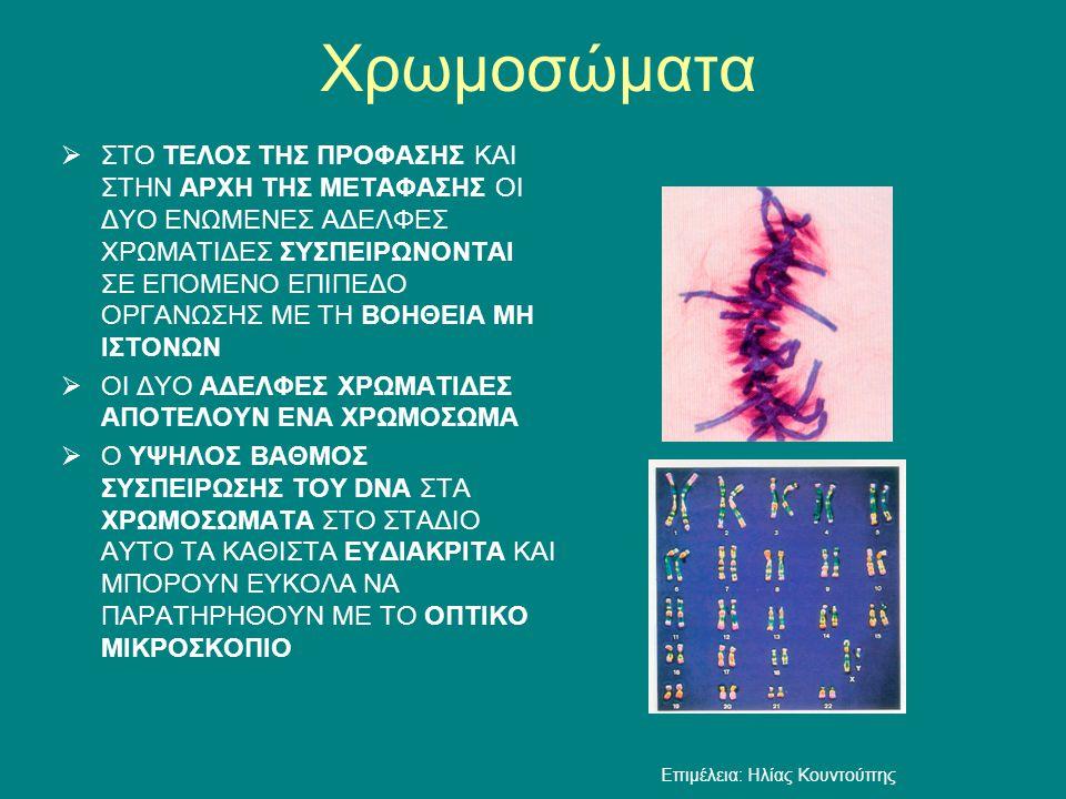 Χρωμοσώματα