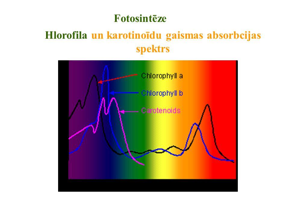 Hlorofila un karotinoīdu gaismas absorbcijas spektrs