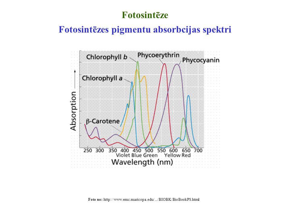 Fotosintēzes pigmentu absorbcijas spektri