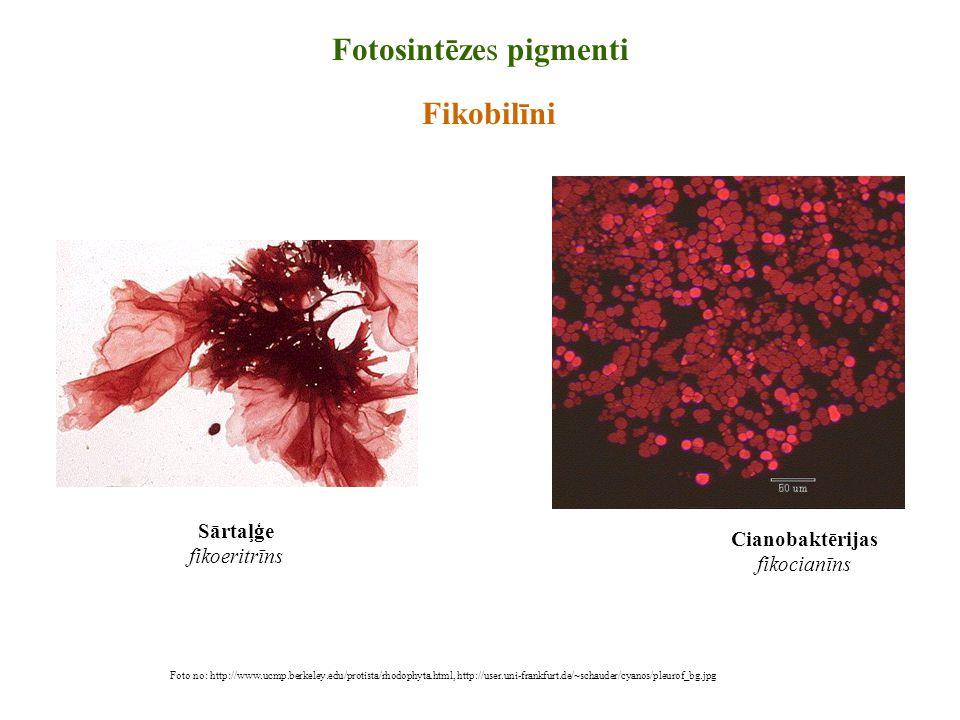 Fotosintēzes pigmenti