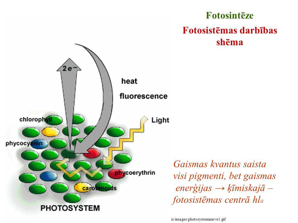 Fotosistēmas darbības shēma