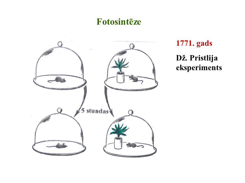 Fotosintēze 1771. gads Dž. Pristlija eksperiments