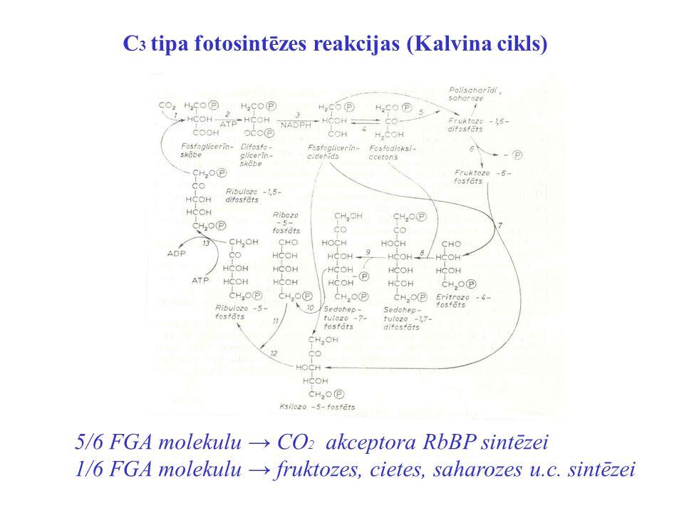 C3 tipa fotosintēzes reakcijas (Kalvina cikls)