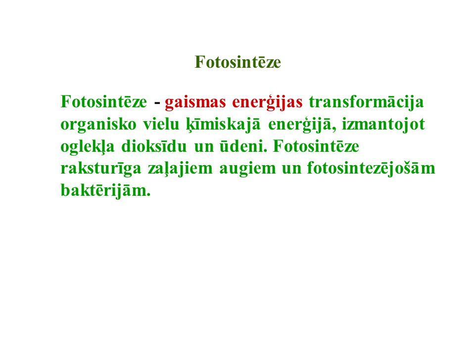 Fotosintēze