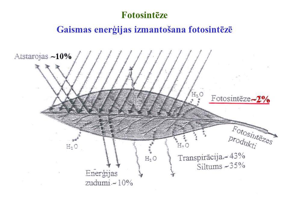 Gaismas enerģijas izmantošana fotosintēzē