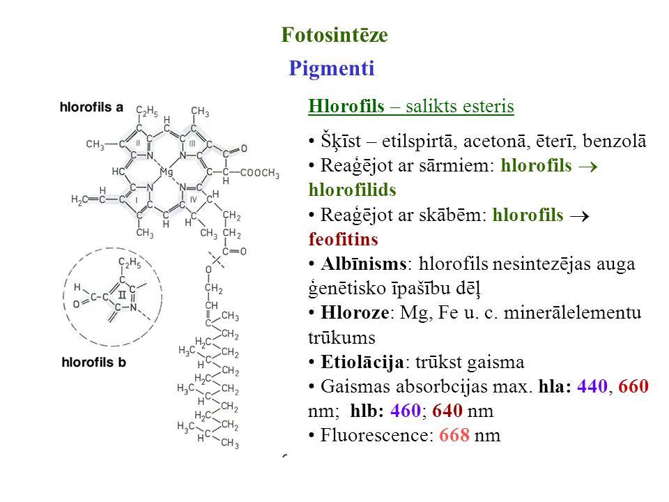 Fotosintēze Pigmenti Hlorofils – salikts esteris