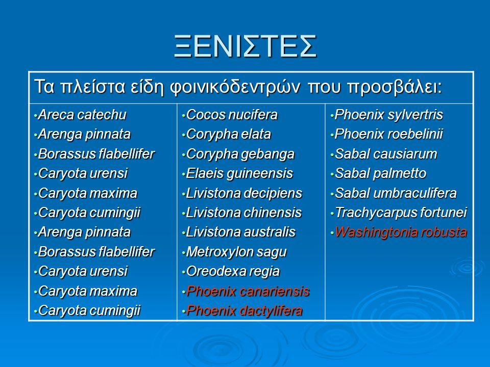 ΞΕΝΙΣΤΕΣ Τα πλείστα είδη φοινικόδεντρών που προσβάλει: Areca catechu