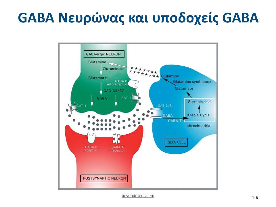 Υποδοχέας GABA 1/2 ©cnsforum.com