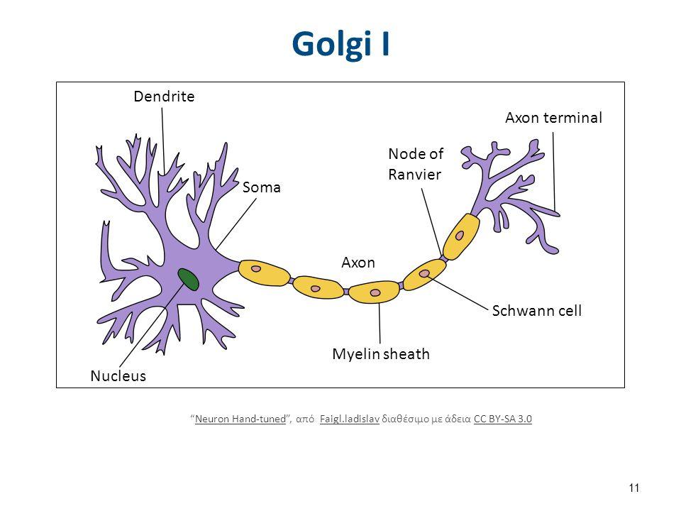 Bipolar Interneuron , by Anmats διαθέσιμο με άδεια CC BY 3.0