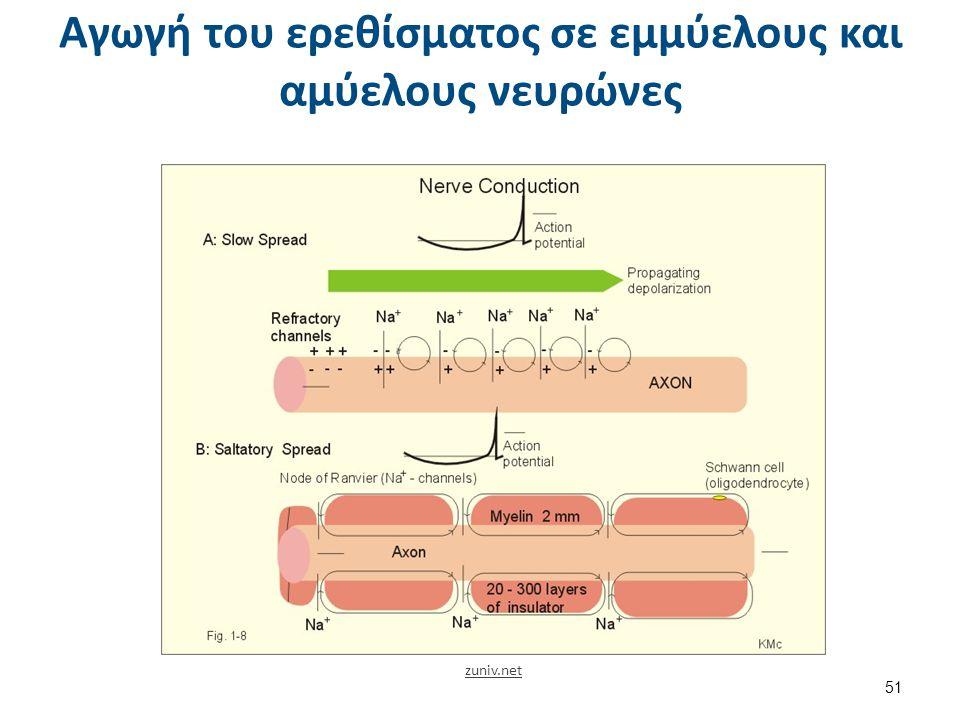 Κίνηση των ιόντων στις φάσεις του δυναμικού ενέργειας