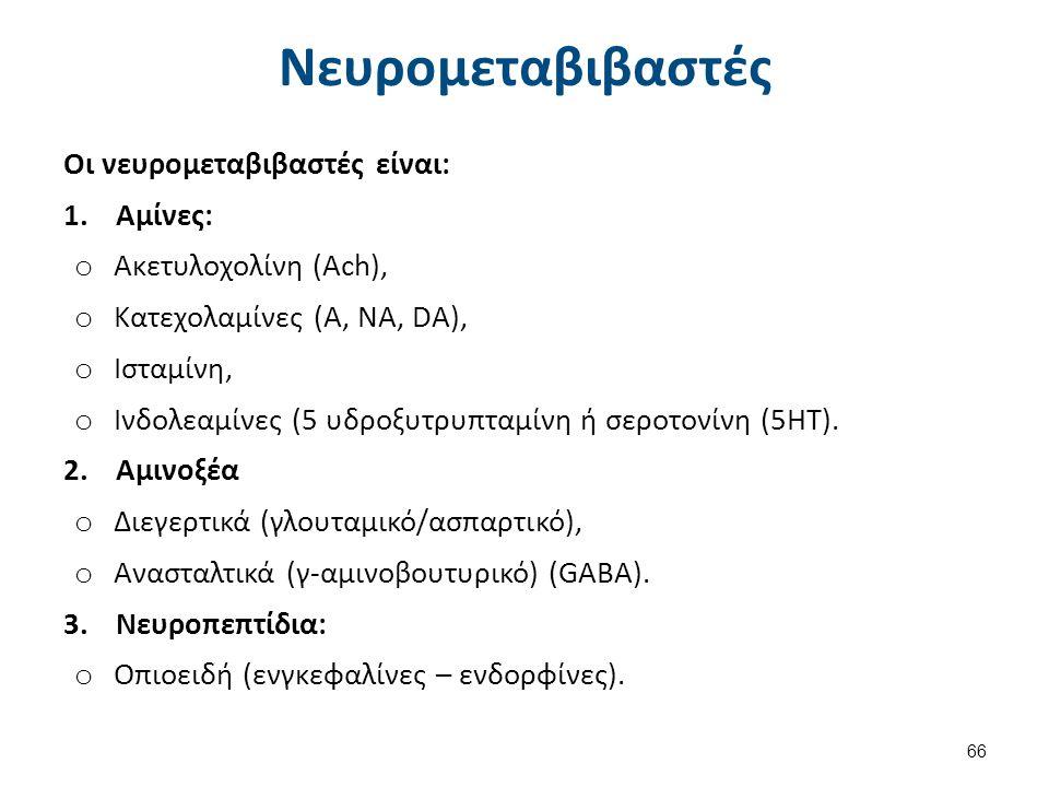 Τα κυριότερα συστήματα νευρομεταβιβαστών