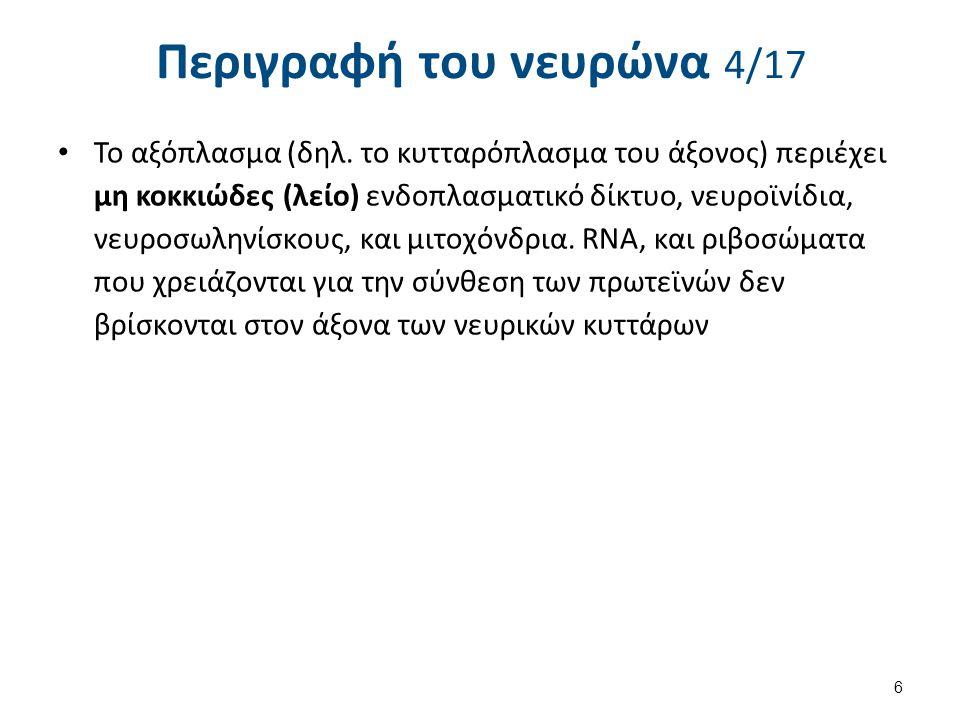 Περιγραφή του νευρώνα 5/17