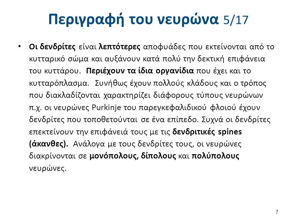 Περιγραφή του νευρώνα 6/17