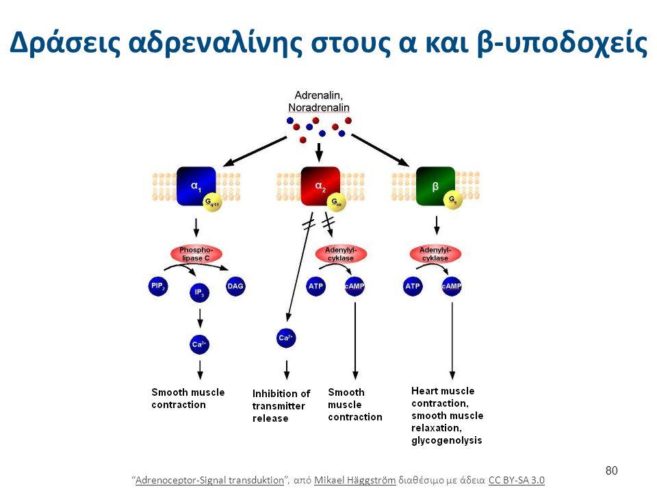 Δράσεις αδρεναλίνης στους β-υποδοχείς