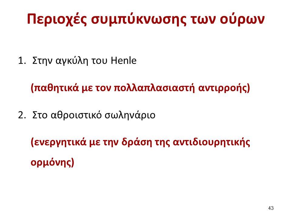 Η λειτουργία της αγκύλης του Henle