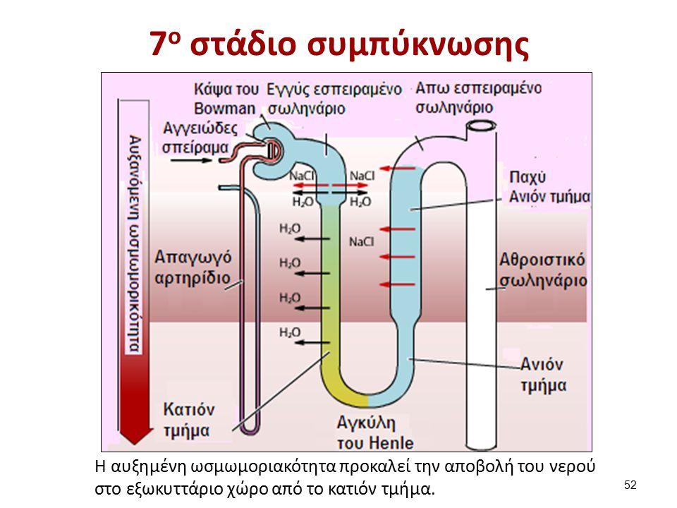 8ο στάδιο συμπύκνωσης Aπαγωγό αρτηρίδιο.