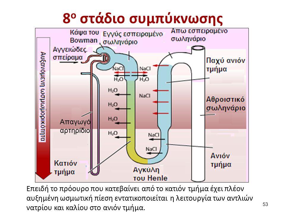 9ο στάδιο συμπύκνωσης Aπαγωγό αρτηρίδιο.