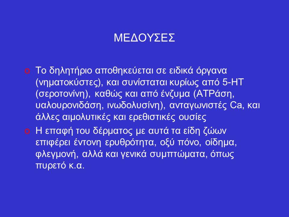 ΜΕΔΟΥΣΕΣ