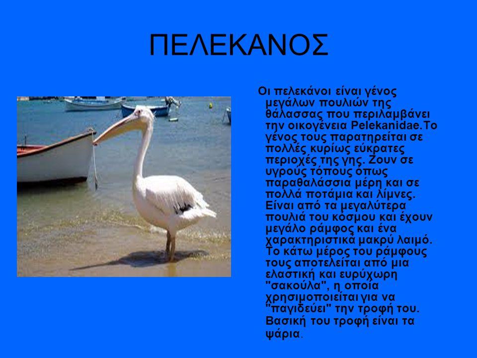ΠΕΛΕΚΑΝΟΣ