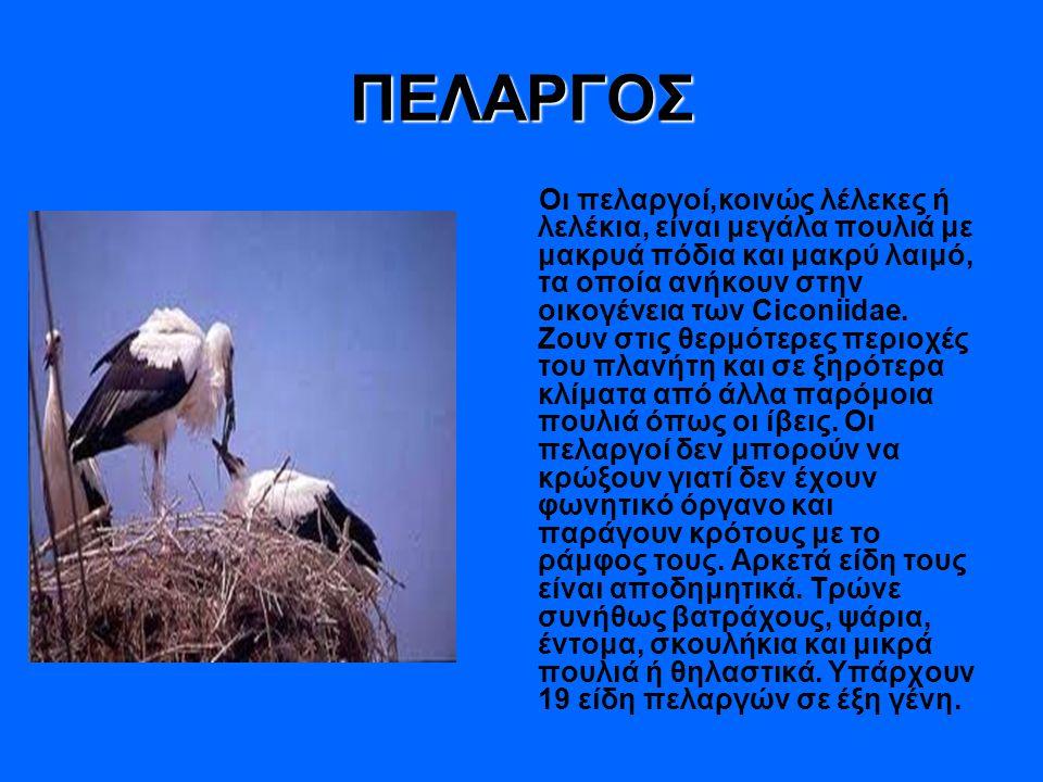 ΠΕΛΑΡΓΟΣ
