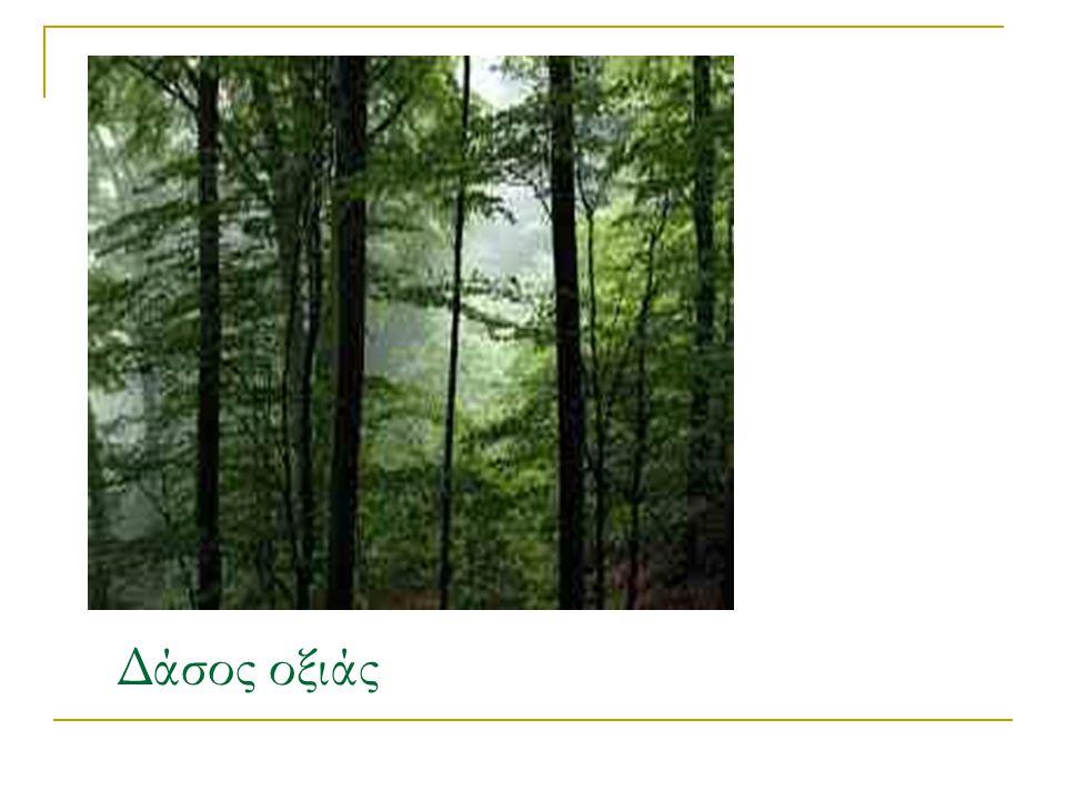 Δάσος οξιάς