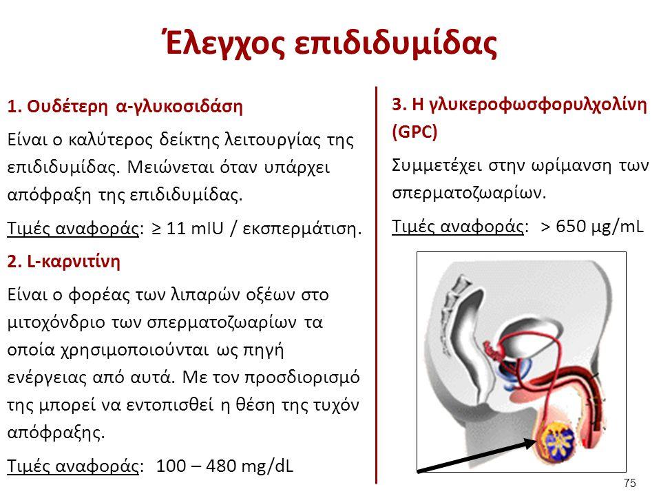 Έλεγχος σπερματοδόχων κύστεων