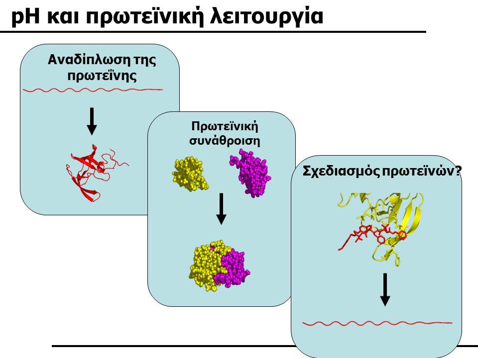 Αναδίπλωση της πρωτεΐνης