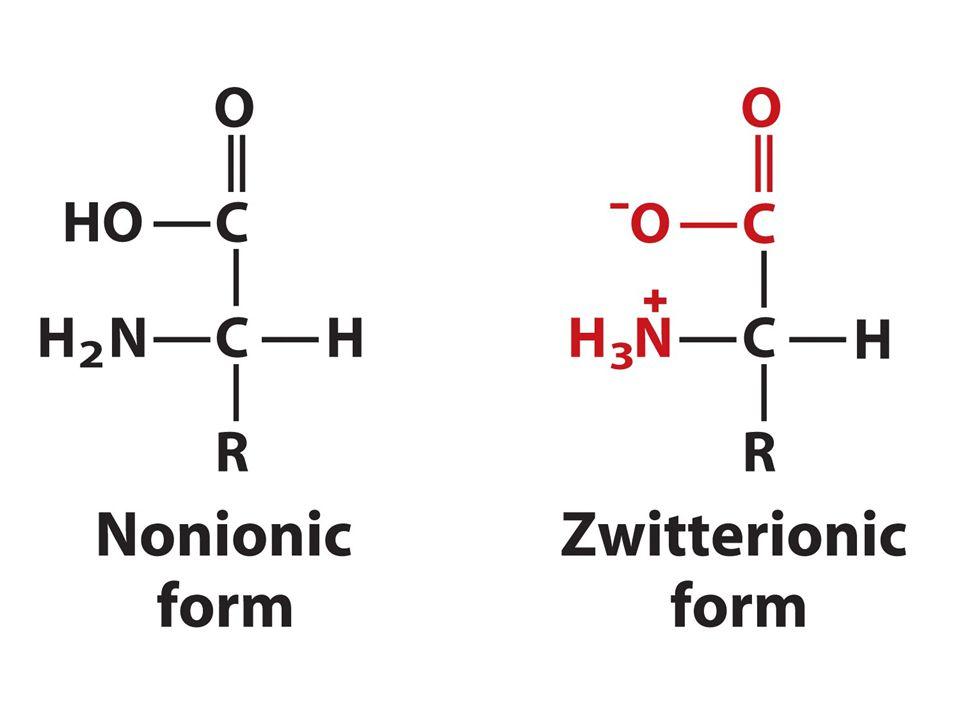 Αμινοξέα-Πεπτίδια-Πρωτεΐνες