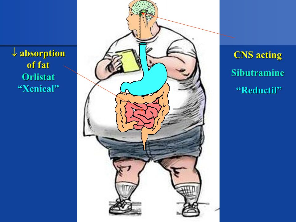 absorption of fat Orlistat Xenical CNS acting Sibutramine Reductil