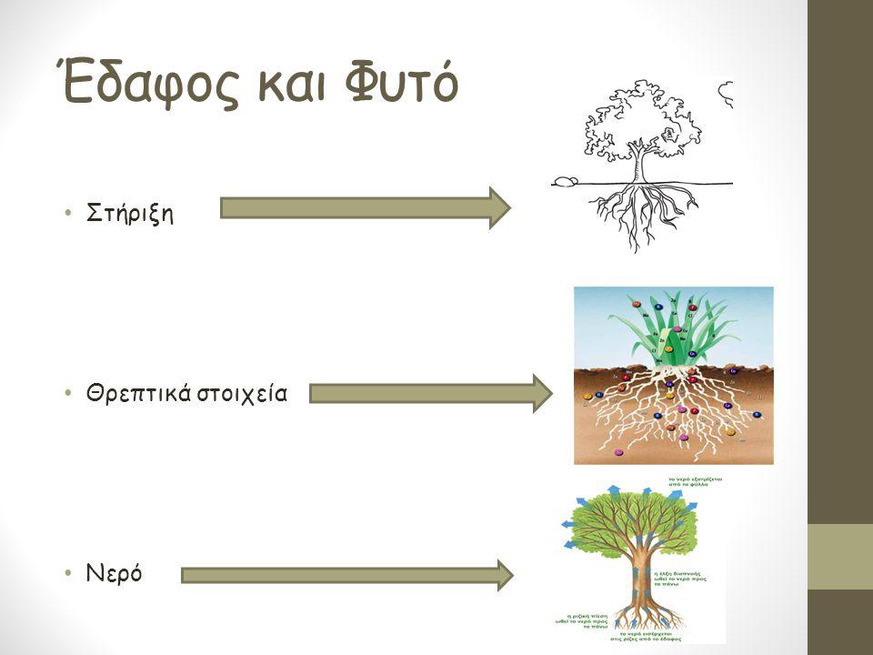 Έδαφος και Φυτό Στήριξη Θρεπτικά στοιχεία Νερό