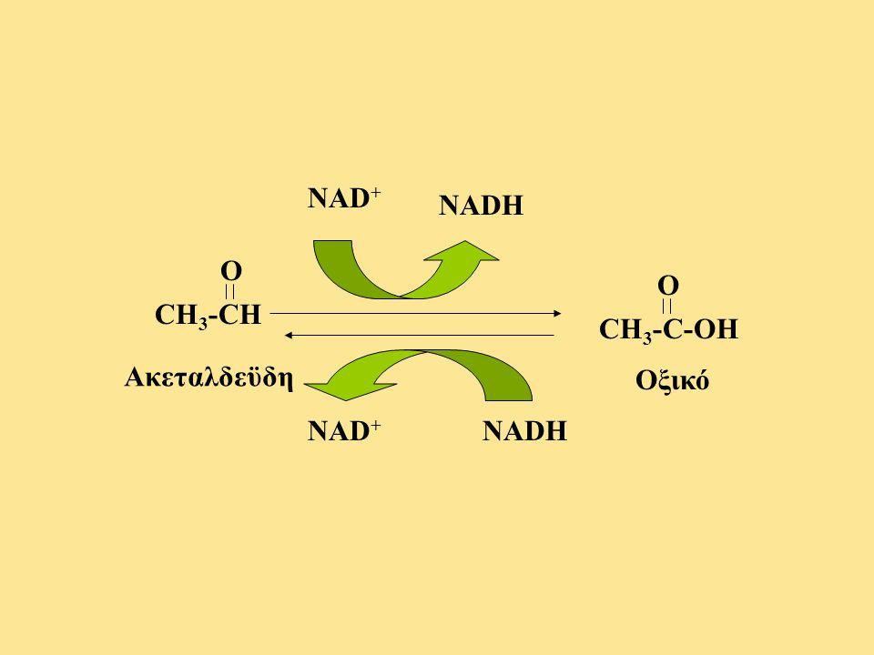 NAD+ NADH O O CH3-CH CH3-C-OH Ακεταλδεϋδη Οξικό NAD+ NADH