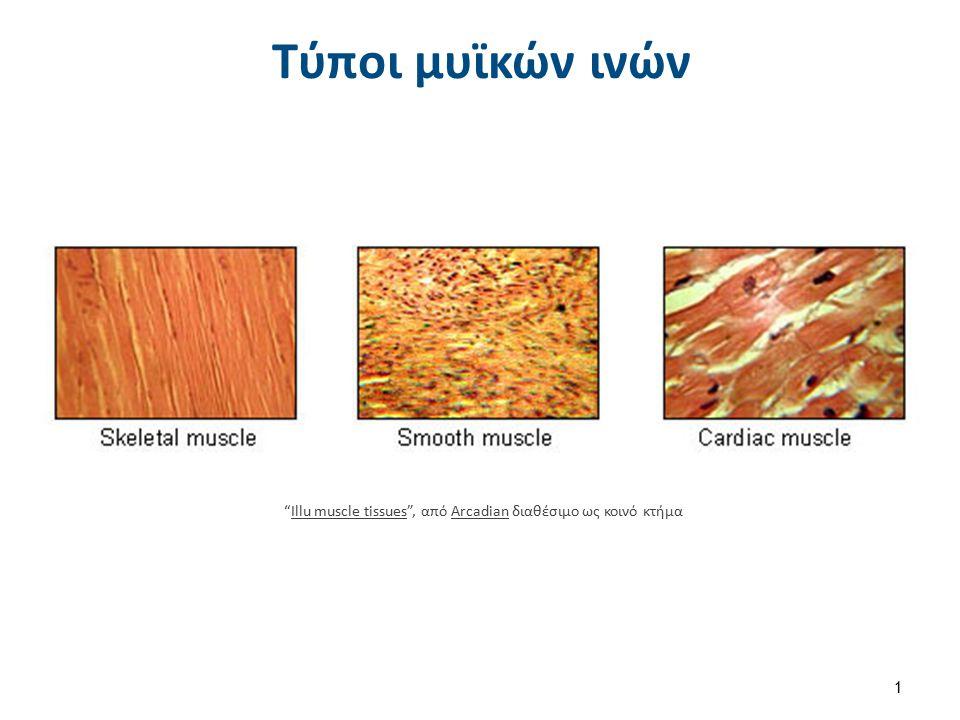 Διαχωρισμός των μυών