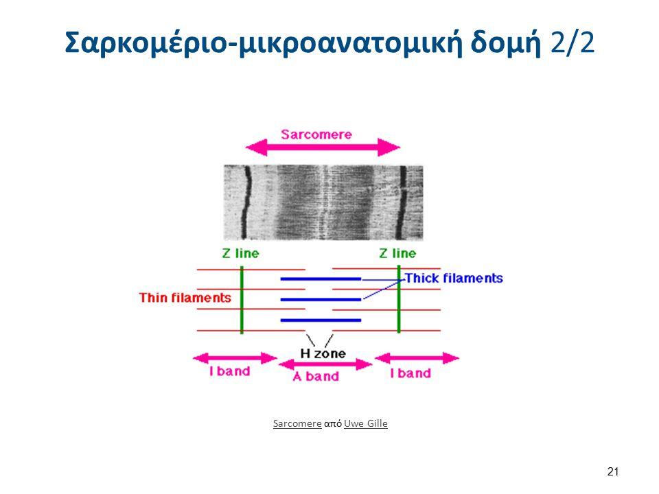 Actin Myosin , από Tradimus διαθέσιμο ως κοινό κτήμα