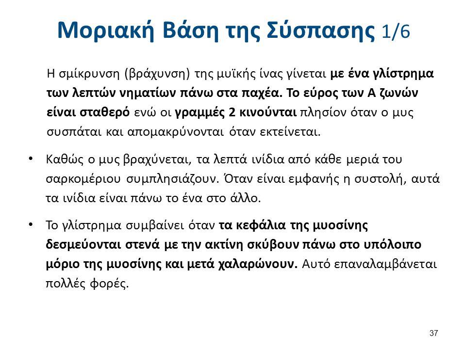 Μοριακή Βάση της Σύσπασης 2/6
