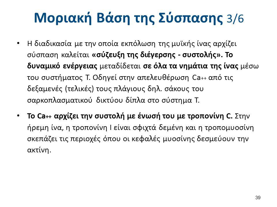 Μοριακή Βάση της Σύσπασης 4/6