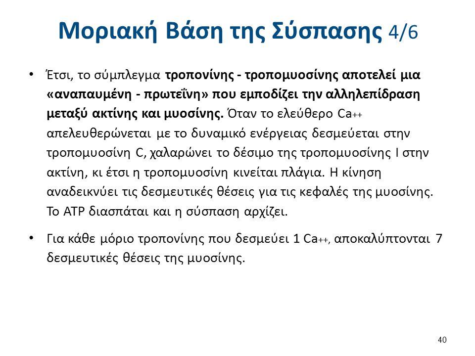 Μοριακή Βάση της Σύσπασης 5/6