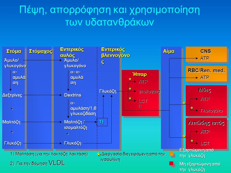 Πέψη, απορρόφηση και χρησιμοποίηση των υδατανθράκων