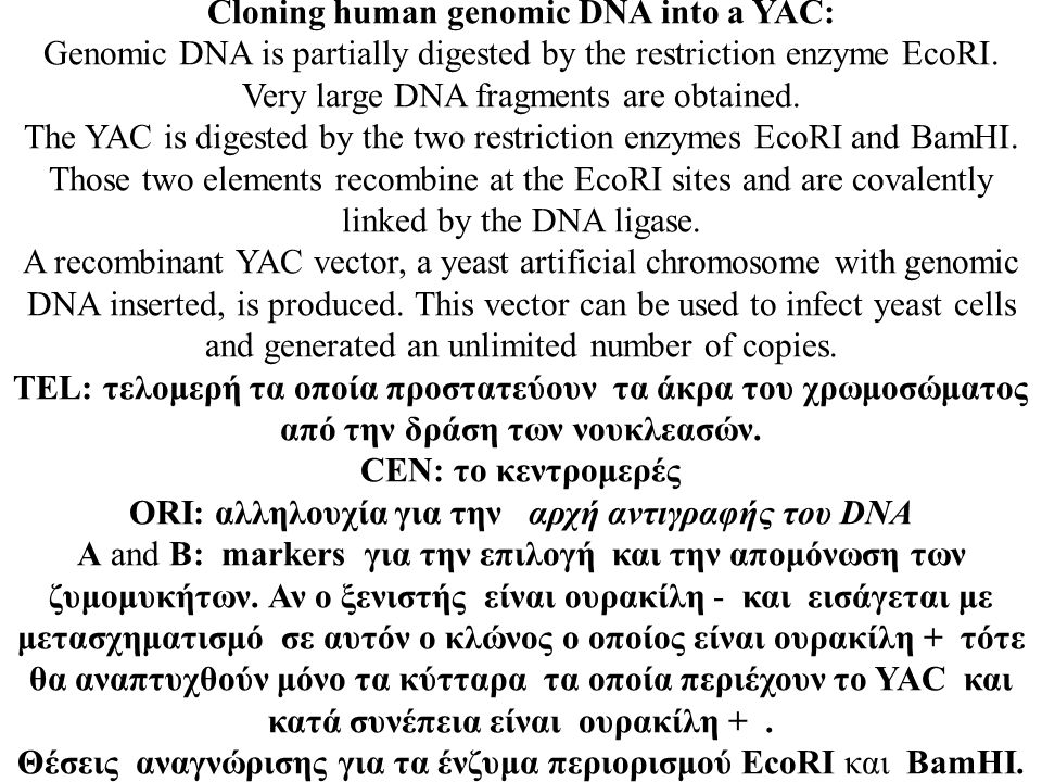 Cloning human genomic DNA into a YAC: