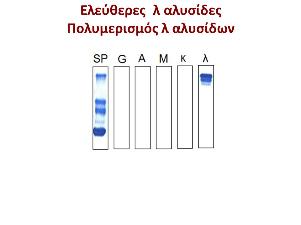 Aπάντηση: ΙgG, λ Πολυμερισμός λ αλυσίδων