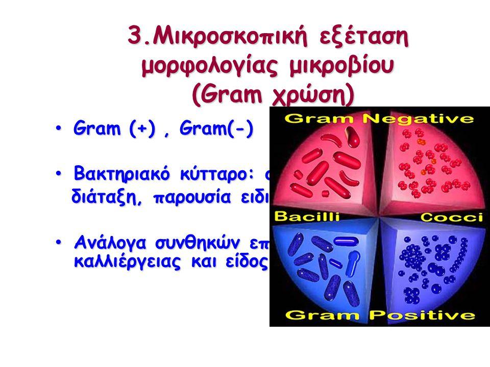 3.Μικροσκοπική εξέταση μορφολογίας μικροβίου (Gram χρώση)
