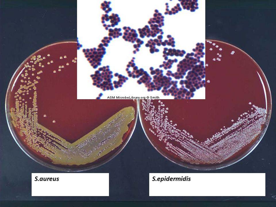 S.aureus S.epidermidis