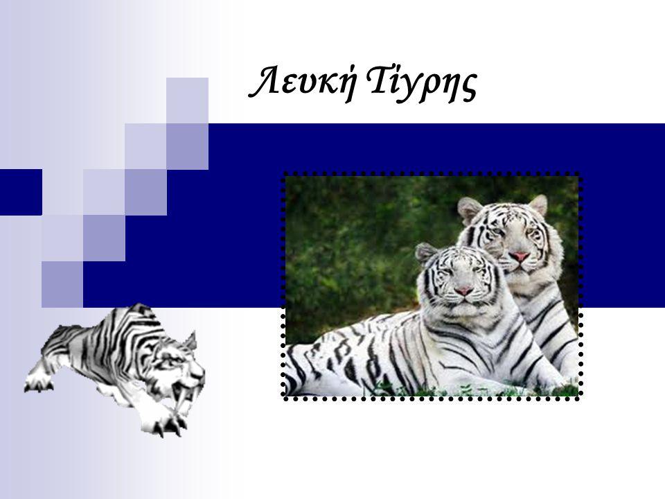 Λευκή Τίγρης