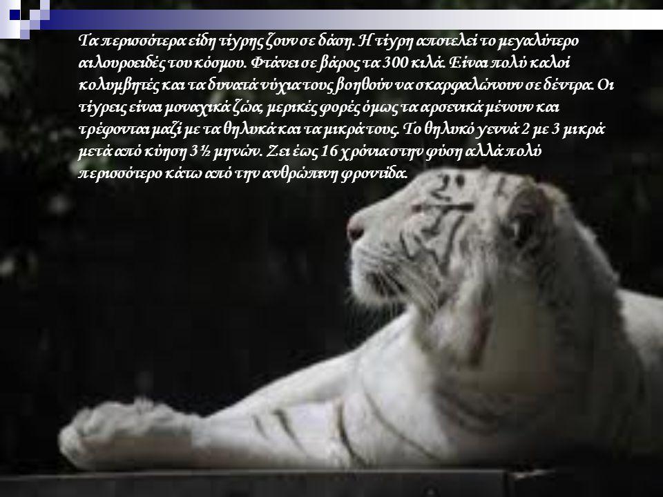 Τα περισσότερα είδη τίγρης ζουν σε δάση