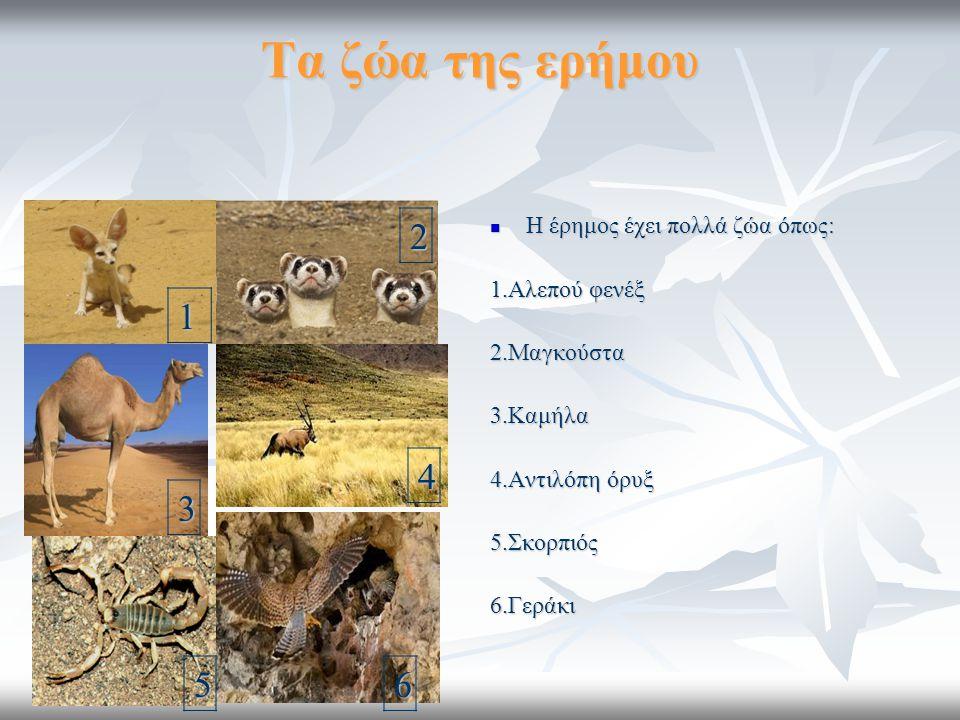 Τα ζώα της ερήμου 2 1 4 3 5 6 Η έρημος έχει πολλά ζώα όπως: