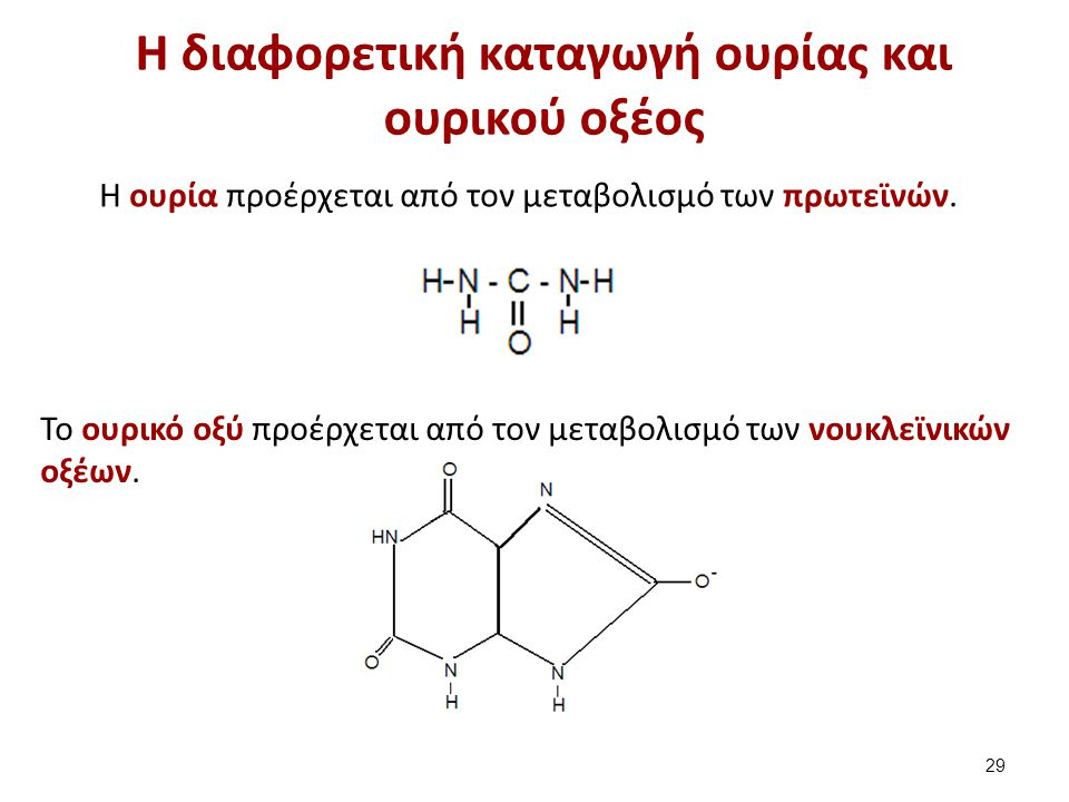Η παραγωγή NH3 – Απαμίνωση και τρανσαμίνωση (1 από 2)