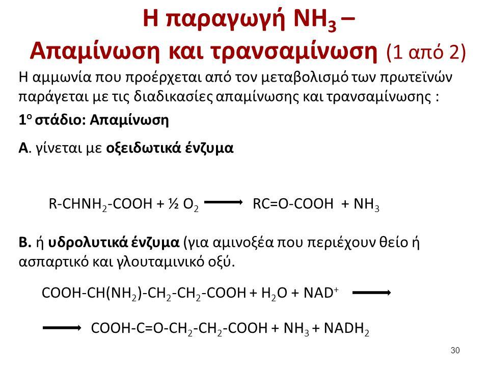 Η παραγωγή NH3 – Απαμίνωση και τρανσαμίνωση (2 από 2)