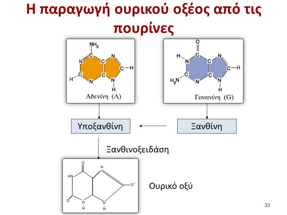 Τα συστατικά των ούρων Νερό, Ουρία, Ουρικό οξύ, Κρεατινίνη,